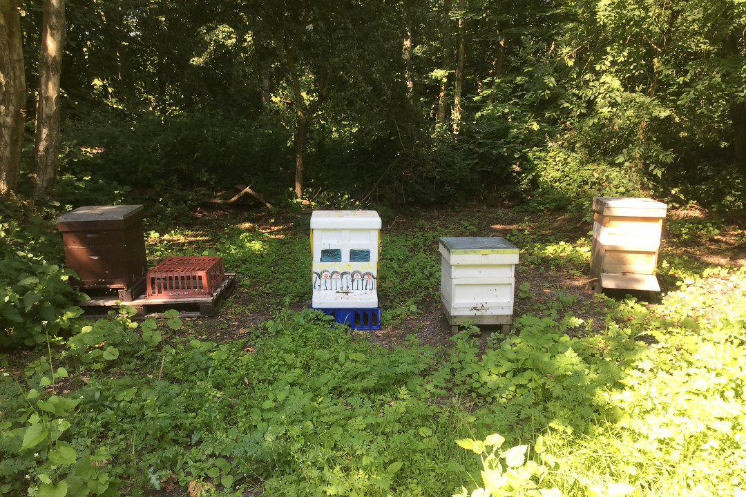 Hives in Stockade wood-web720x1080U100