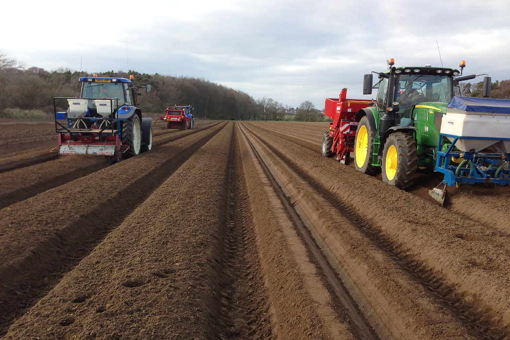 Potato planting-web683x1024U100