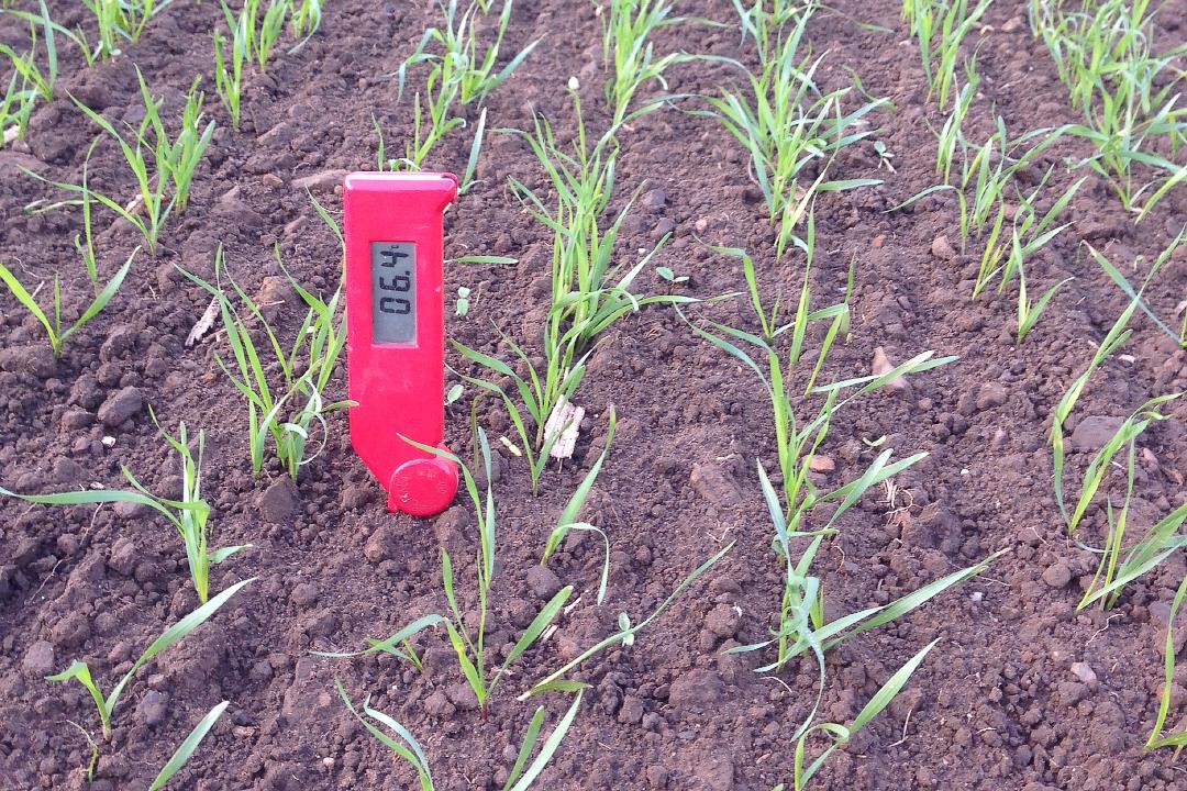 Wheat inspection.jpg-web720x1080U100